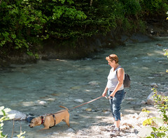 Sam,in Inzell 2017 (Günter Hentschel) Tags: sam labrador labbi lab labby labs yellowlab yellowlabrador yellowlabs yellow hund dog perro chien hond deutschland germany germania alemania allemagne europa bayern chiemgau nikon nikond5500 d5500 hentschel outdoor urlaub ferien chillen gassi