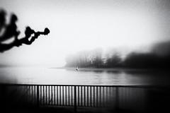 3136 (Elke Kulhawy) Tags: cologne köln art kunst bnw bw blackandwhite porz grain fog nebel monochrome elkekulhawy