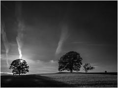 Sky Lines (Thunderbird61) Tags: sky lines sunset landscape trees oldoaks shadows bw sw zw nb bn zwartwitwitzwart schwarzweiss blackwhite mono monochrom monochrome pentax pentax645z pentaxart mediumformat nature natur