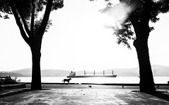Distant (cekic photography) Tags: dog animal photojournalism nature sea trees flower blackandwhite monochorme istanbul cityscape beyoglu galata people human insan turkey turkiye turkish life skylines winter cloud wallpaper art photography photographers alone solitary melancholy cekicphotography erencevik urban rural landscape vsco fujifilm european travel exploration instagram photographer monoart window building architecture faydalialetcekic cekic artofvisuals documentary pic turkei turchia landscapes europe silhouette bosphorus ship summer