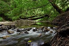 aptoscreek_L2090634 (nocklebeast) Tags: nrd nisenemarks aptoscreek creek water forest aptos ca usa scphoto