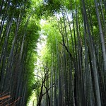 Kyoto - Bamboo forest thumbnail