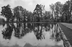 Reflections on rainy day [BW] (Modesto Vega) Tags: nikon nikond600 d600 fullframe pond estanque rain lluvia lagranjadesanildefonso realsitiodelagranjadesanildefonso royalpalaceoflagranjadesanildefonso reflection ripple segovia spain españa water