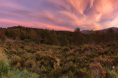 Heather MacCloud (J McSporran) Tags: scotland trossachs lochlomondandtrossachsnationalpark heather clouds landscape canon6d