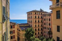 Liguria verticale ... (miriam ulivi) Tags: miriamulivi nikond7200 italia liguria camogli case houses mare sea cielo sky alberi trees landscape architetture