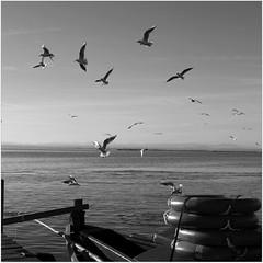 La Albufera! (Vicensalamas) Tags: lago bn canon paisaje pajáros agua laalbufera comunidadvalenciana primavera día calor gaviotas aves