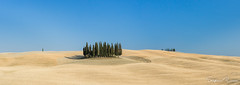 Cypresses in wheat fields (StefanoRicca89) Tags: sand nature desert landscape panoramic sky dune no person travel dry summer outdoors hot alone sun fair weather horizontal arid heat hill wheat wheatfields cipressi cypresses orcia vad dorcia san quirico minimal
