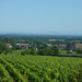 Route des Grands Crus - Couchey towards Fixin