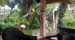 Private Seminyak villa garden, Bali (scinta1) Tags: indonesia bali seminyak villa garden green peaceful tranquil restful tropical trees palms leaves flowers bohemian private plants mirror reflection chairs orchid purple