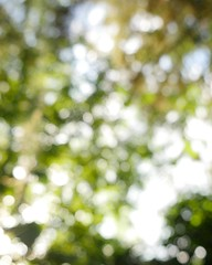A green bokeh #green #leaves #nature #outside #abstact #blur #bokeh #dof #depthoffield sunny #sky #upside #summer #special #nofilter #unscharf #great (Weasel Effects) Tags: outside abstact sky green unscharf special dof summer blur nature depthoffield great nofilter leaves upside bokeh