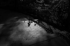 Step Shadow I (Joe Josephs: 3,166,284 views - thank you) Tags: manhattan nyc newyorkcity travel travelphotography joejosephs parks peaceful quiet riversidepark tranquil urbantravel urbanexlporation urbanparks â©joejosephs2017 ©joejosephs2017 blackandwhitephotography blackandwhite