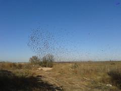 Зверушки 0134 (2014.10.27) (vladsky78) Tags: ильичёвск небо птицы зелень поле
