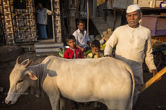 BADAMI : VACHE (pierre.arnoldi) Tags: inde india badami pierrearnoldi photoderue karnataka portraitdhomme vache photooriginale photocouleur