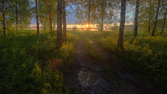 towards the sun (Sergey S Ponomarev) Tags: landscape paysage paesaggio woods birch trees morning sunrise wet grass field clouds path road pond summer july estate luce light hdr highdynamicrange moment sergeyponomarev canon eos 70d efs1018mmf4556isstm kirov russia russie north nord 2017 europe сергейпономарев природа поля лес утро рассвет киров россия лето туман пейзаж облака лужа mist fog nature natura