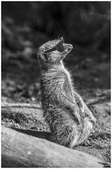 Finally, summer.... (Lato-Pictures) Tags: composing tiere animals draussen outside extérieur fuori al aire libre buiten utanför fora на дворе zewnątrz ulkona ute dışarı sonne sun soleil sole sol zon солнце słońce sommer summer holiday sonnenbrille sunglasses