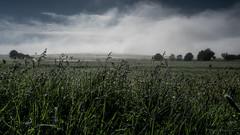 grass in the morning (thomas.reissnecker) Tags: schwäbischealb badenwürttemberg grass landscape
