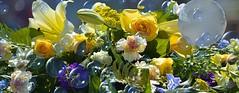 Beautiful Flowers & Bubbles (swong95765) Tags: flowers bubbles beautiful pretty gorgeous wonderful lovely festive bouquet