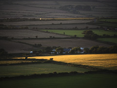 Golden Field (Manxscape Photography) Tags: field fields sun setting gold golden yellow reflected farming farm agriculture lonan parish isleofman manx manxscape andrewhaddock summer hedges