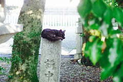 Today's Cat@2017-07-11 (masatsu) Tags: cat thebiggestgroupwithonlycats catspotting pentax mx1