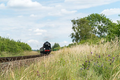 The tones of Summer (VehicularBrit) Tags: nature plants flower watercress line mid hants railway summer southern region bulleid merchant navy 35006 po alresford ropley northside lane focus