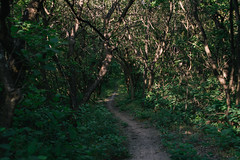 Forest path (Frostroomhead) Tags: forest path leaves trees road nature dark way nikon d5200 sigma 30mm f14 art