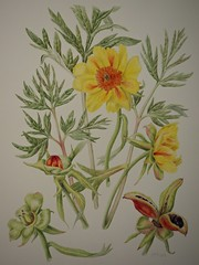 P5102554 (simonrwilkinson) Tags: nymans nationaltrust haywardsheath westsussex handcross watercolour