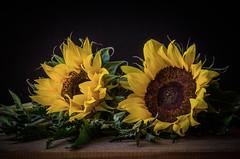 Dos... (JACRIS08) Tags: amarillo yellow flores flowers stilllife bodegon
