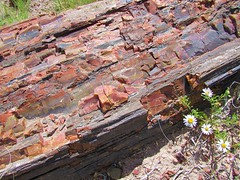Petrified tree (thomasgorman1) Tags: wood trees tree logs fossil prehistoric park desert flowers arizona national outdoors rock