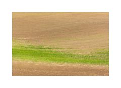 Summer Vol. 1 #04 (AIIex) Tags: terrain terreno terra landscape paesaggio minimal nikon 7100 linux darktable opensource