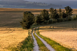Marche countryside