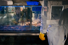 (samrodgers2) Tags: canpubphoto reflection fish mermaid chinatown londonstreetphotography london