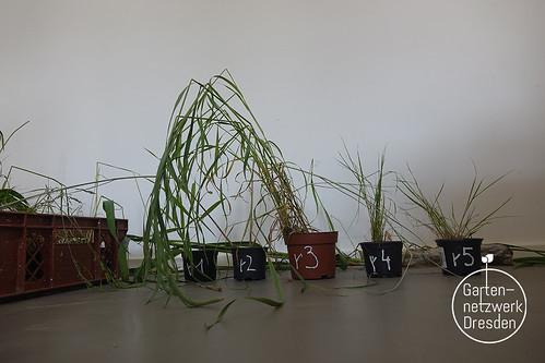 grassisgreener_08