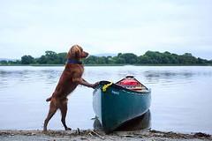 Pirates wait for no man! • • • • • #campingwithdogs #hikingwithdogs #dogsonadventures #dogsthathike #adventuredog #thestatelyhound #houndandlife #backcountrypaws #doglove #hikingdogsofinstagram #excellent_dogs #adventureswithdogs #topdogphoto #heelergram (watson_the_adventure_dog) Tags: pirates wait for no man • campingwithdogs hikingwithdogs dogsonadventures dogsthathike adventuredog thestatelyhound houndandlife backcountrypaws doglove hikingdogsofinstagram excellentdogs adventureswithdogs topdogphoto heelergram hikingdog animaladdicts traildog topirelandphoto bestwoof campingcollective visualsgang wanderireland instaireland inspireland irishpassion irelandgram campingculture stayandwander pawsitiveliving