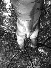 Kinky Nature   PG 16  !  ;-) (Mike Y. Gyver ( Organize in Albums)) Tags: blackwhite nikon coolpix l29 2014 mygphotographiewixsitecommyg2017 myg fun pov ngc