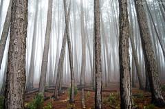 Campos do Jordão - SP (Diego Kusayama) Tags: campos do jordao sp brazil cold winter nature natureza nikon d5100 forest frio inverno