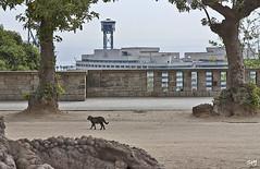 Gat català (Montjuïc) (svet.llum) Tags: barcelona montjuic montjuïc catalunya cataluña ciudad gato gat arquitectura paisaje primavera animal