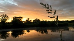 Floral Sunset (*mirt) Tags: pond clouds fridayfloralfriday 7dwf silhouette nature evening sky water sunset flower floral reflections
