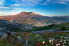 Contradiction (P Matthews) Tags: mtsthelens wildflowers rebirth nationalpark sunset decay volcano ruins valley