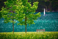 summer breeze (W.MAURER foto) Tags: austria österreich tirol tyrol achensee segeln segelboot sommer summer farben wiese blumenwiese grün green bäume baum wasser see glitzern briese breeze nikon nikond800 nikkor70200f28vrii orton effekt ortoneffect
