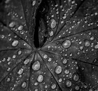 Raindrops at leaf