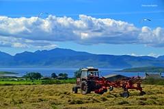 (Zak355) Tags: rothesay isleofbute bute scotland scottish farming farm masseyferguson tractor