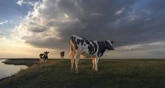 Iddylisch Noordpolderzijl... (Jan Wedema) Tags: noordpolderzijl jeeeweee landschapsfotograaf groningen janwedema