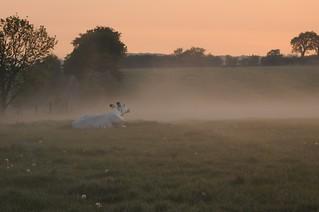 Morgens beim Rinder Zählen; Bergenhusen, Stapelholm (1)