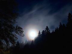 Notti magiche (Fernando De March) Tags: notti anello lunare luna stelle foresta alpago nebbia