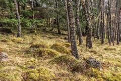 Burn O'Vat Forest Trails (robinta) Tags: landscape light shadows scotland nature trees woods forest ballater flora grass rural pentax sigma18200mmhsmc ks1 leaves wild ngc flickrunited