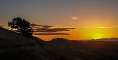 Te Mata Peak Sunset (Ard Buurmans) Tags: cloud hawkesbay mountain nz nature newzealand northisland olympuse300 sunset tematapeak tree