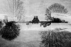 big.ideas (jonathancastellino) Tags: landscape abstract film analog analogue lomo lomography lca ottawa explosion tree root fireworks idea ideas multipleexposure architecture