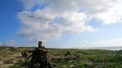 IMG_0559.1 (mikehogan2) Tags: padreisland nationalseashore texas pelicans