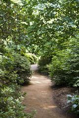 2017-06-18 Virginia Water Savill Gardens IMG_9069 (Darkstar Moody) Tags: virginiawater savillgardens plants flowers trees water ponds lakes wildlife gardens flora fauna