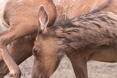 alaska toutr day 5 (4 of 18) (Photo-Flare) Tags: alaska ny newyork personalvacationphotographer phototours photographyfortravelers vacationphotographer wildlifephotographers honeymoonideas